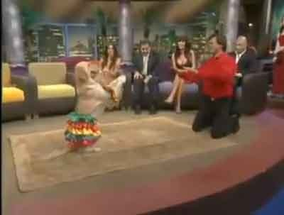 Un catel care danseaza merengue
