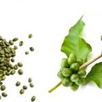 Cura de slabire cu cafea verde